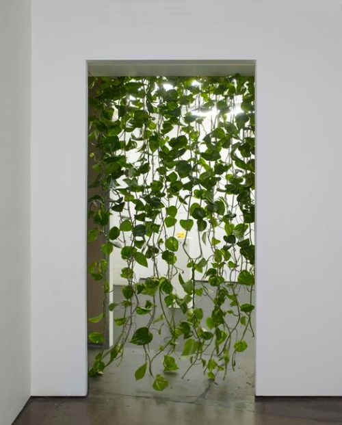 oversize plant