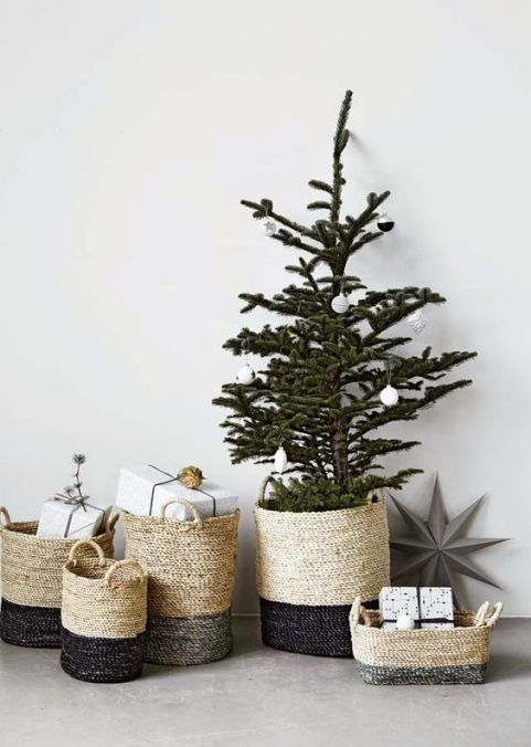 tree-in-baskets