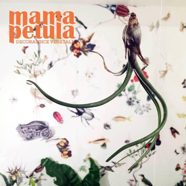mama-petula-carte