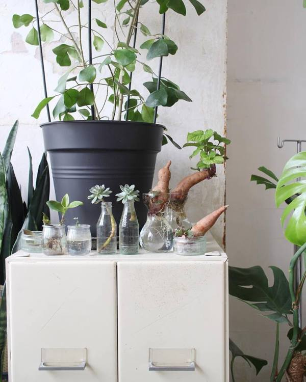 mama-petula-plantes-diverses